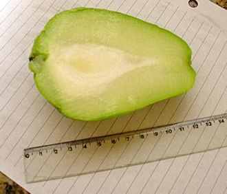 Chayote - Cut chayote showing seed