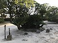 Cycas revoluta in Sofukuji Temple.jpg