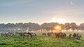 Dülmen, Merfeld, Dülmener Wildpferde in der Wildbahn -- 2016 -- 4240.jpg