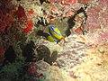 DSC00239 - recifes de coral - Naufrágio e recifes de coral no Nilo.jpg