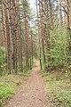 DSC 7034 Bacieczkowski Forest in Białystok May 2020.jpg