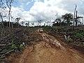 Daño por tala y quemq en La Macarena.jpg