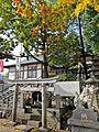 Daimyo oak tree of Taga-jinja shrine in Taihaku ward,Sendai city.JPG