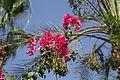 Dans les jardins de l'hôtel à Eilat - Israël (7582435310).jpg