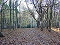 Deciduous Woodland in Reigate Abbey Park, Surrey - geograph.org.uk - 86773.jpg