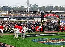 I cavalli si mettono in mostra preparandosi per la Melbourne Cup
