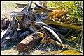 Destruction of Woody Point-11-Large (2924125612).jpg