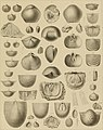 Die Versteinerungen des rheinischen Schichtensystems in Nassau. Mit einer kurzgefassten Geognosie dieses Gebietes und mit steter Berücksichtigung analoger Schichten anderer Lander (1850) (14783855552).jpg