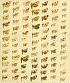 Die palaearktischen tortriciden. Eine monographische darstellung mit 24 tafeln in farbendruck, einer stammtafel und mehreren abbildungen im text. Mit einer unterstützung des (20317683243).jpg
