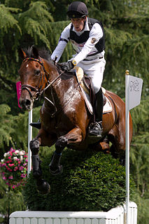 German equestrian