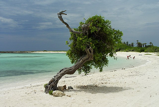 things to do in Aruba off cruise ship, divi tree beach