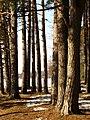 Druvciema piekraste - panoramio (7).jpg