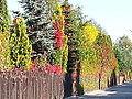 Drzewa jesienią.jpg