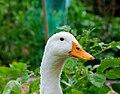 Duck head.JPG