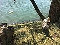 Ducks enjoying the sun and water.jpg