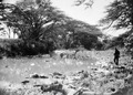 ETH-BIB-Flusslandschaft-Kilimanjaroflug 1929-30-LBS MH02-07-0281.tif