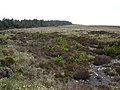 Eastern edge of Raemore Woods - geograph.org.uk - 452704.jpg