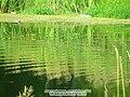 Ecology of Ucha River - panoramio.jpg