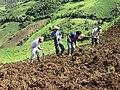 Ecuadorian farmers.jpg