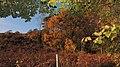 Efterår ved Stovbjerg - panoramio.jpg