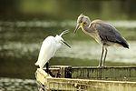 Egret & Heron - Stanborough Lakes (29211878571).jpg