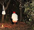 El caganer - Pessebre vivent de Llers.jpg