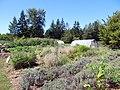Elaine's Vegetable Garden (11446106696).jpg