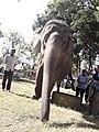 Elephant20171111 122111.jpg