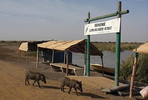 Djoudj National Bird Sanctuary - Pier and warthogs