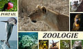 En-tête Zoo5.jpg
