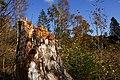 En af rødderne fra Gl. Rye - panoramio.jpg
