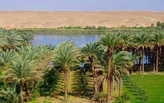 Early Dynastic Period (Mesopotamia) - Irrigated palm grove along the banks of the Euphrates River, in modern-day Southern Iraq. A landscape that has remained unchanged since earliest antiquity.