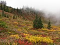 Fall colors and fog in Edith Basin. Mid September 2015. (a0cdadfee195497286c582fa55ccc3e5).JPG