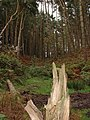 Fallen tree - geograph.org.uk - 593979.jpg