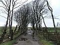 Farm track at Ballure. - geograph.org.uk - 138698.jpg
