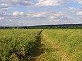Farmland, Cookham - geograph.org.uk - 857214.jpg