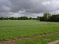 Farmland near Kingsclere - geograph.org.uk - 173400.jpg