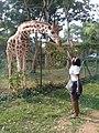 Feeding a giraffe - Uganda Wildlife Conservation Centre.jpg