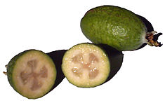 Feijoas on white.jpg
