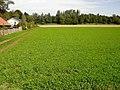 Feld am Ortsrand von Poing - geo.hlipp.de - 21432.jpg
