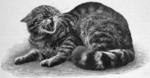 Felis silvestris grampia defensive.png