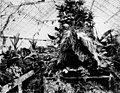 Fern-filled Conservatory at Bowen Park, Brisbane, ca. 1890 (6942941089).jpg