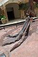 Fernbank Museum - Atlanta - Flickr - hyku (10).jpg