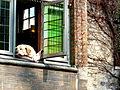 Fidel, de meest gefotografeerde hond van Brugge! (6951243164).jpg