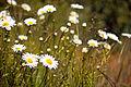Field Of Flowers (3591546005).jpg