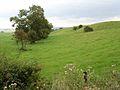 Field above Fairshaw Farm - geograph.org.uk - 244738.jpg