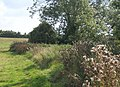 Field edge path along little valley below Ringshall House - geograph.org.uk - 968344.jpg