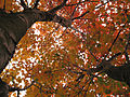 FireTrees-Fall2005-Georgia.jpg
