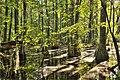 First-landing-cypress-medswamp-abpan.com copy (7166925549).jpg