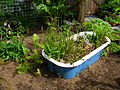 Flickr - brewbooks - Keeping It Green Nursery (1).jpg